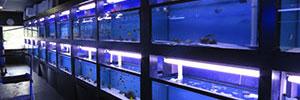 Aquarium Corals and Fish in Canada