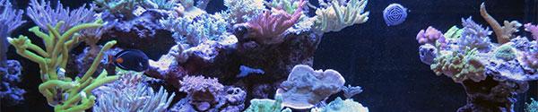 SPS Reef Aquarium Set-ups in Canada