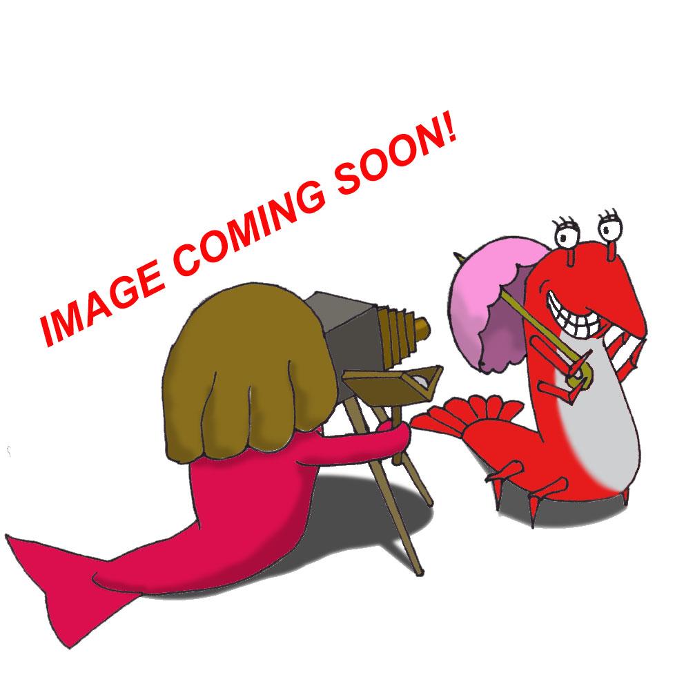 Seahorse  - Reidi (Red) (TR) (
